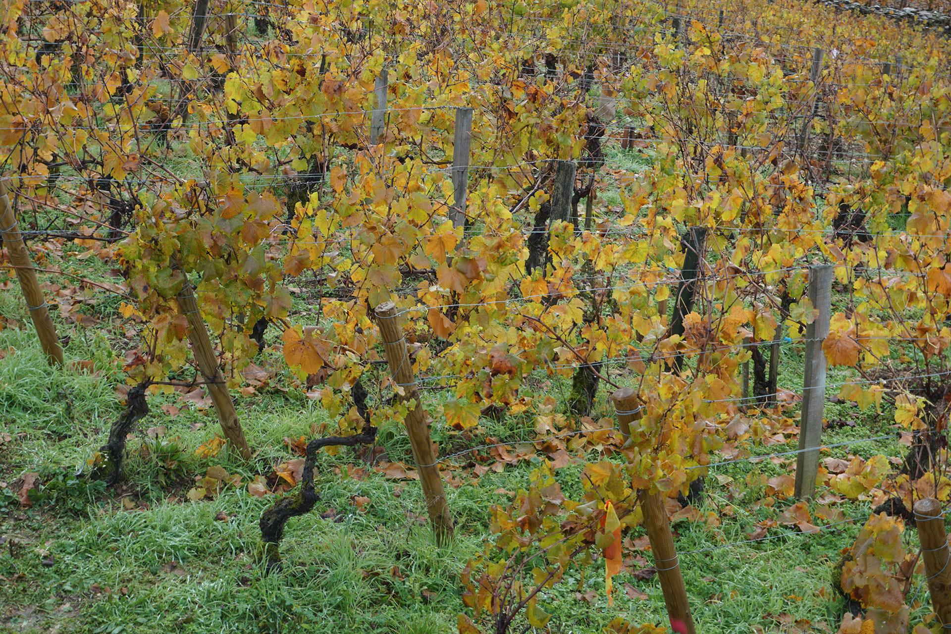 Vigne Centre-Val de Loire